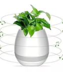 Bluetooth Matera Planta Musical Recargable
